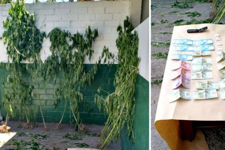 Carabineros de Laja realiza detenciones por microtráfico y cultivo de cannabis sativa