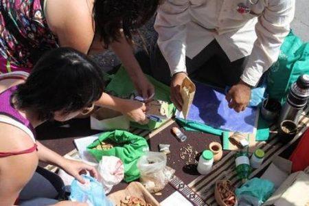 Intercambio de semillas, plantas, libros y saberes en 7ma Feria del Trueque en Laja